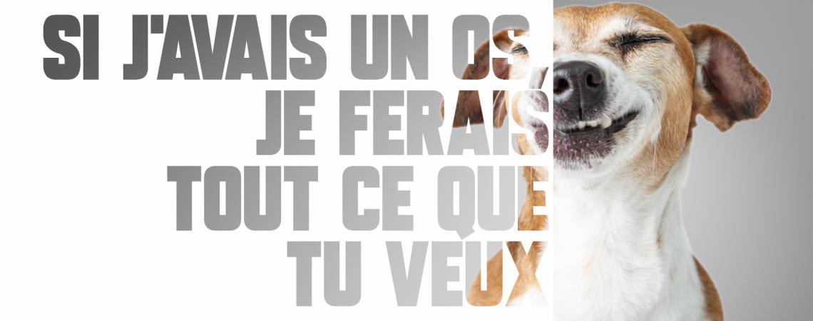 carrousel-chien